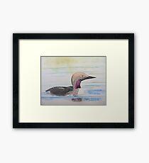 Black-throated Diver Framed Print