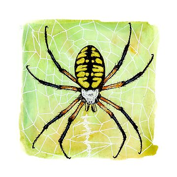 Yellow Garden Spider by jasoncastillo