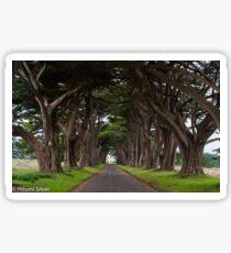 Cypress Tree Tunnel Sticker