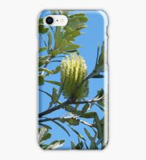 Coast Banksia iPhone Case/Skin