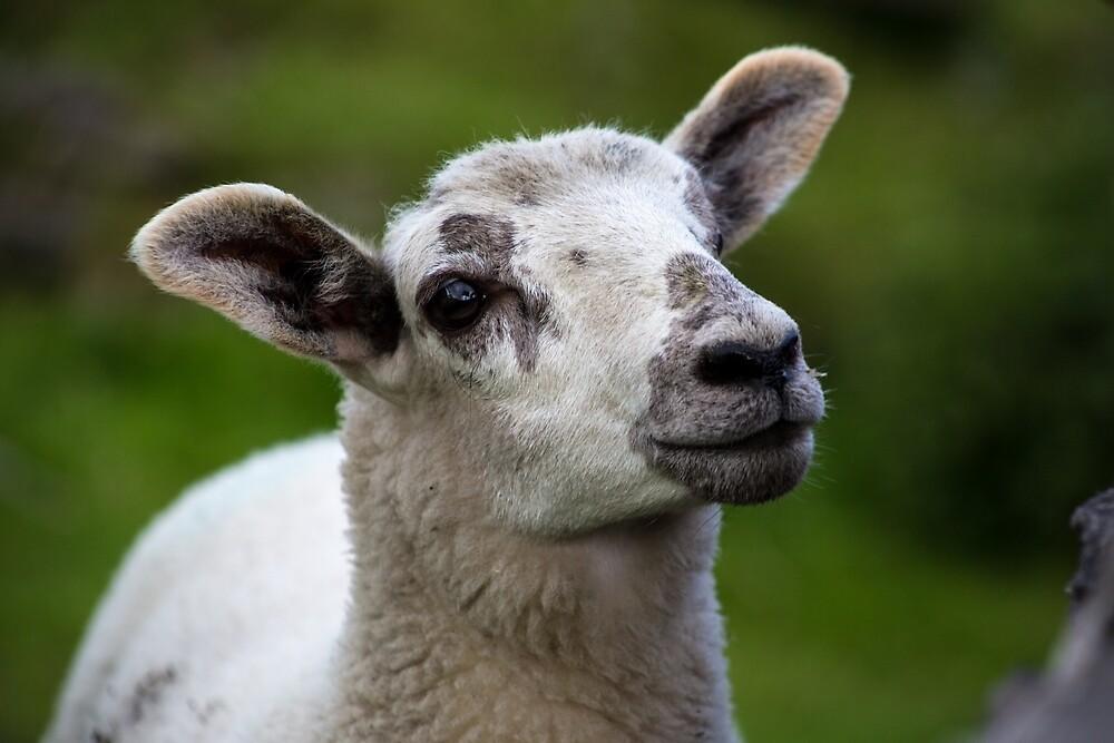 Lamb by Ellesscee