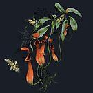 Fleisch fressende Kannenpflanze-Dunkelheit von lascarlatte
