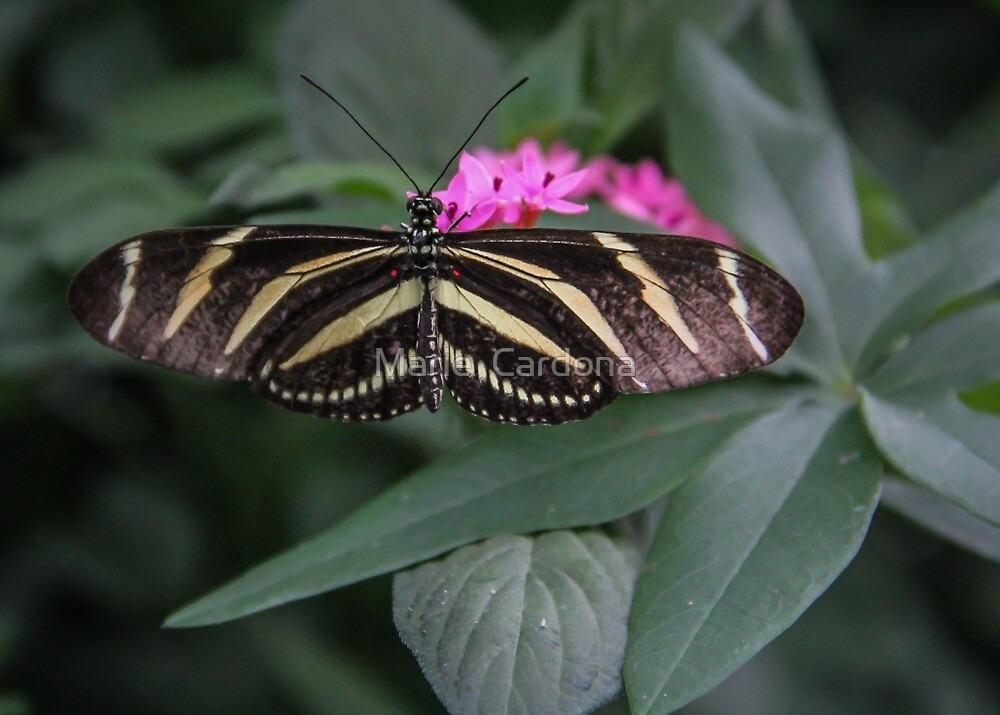 The Longwing and the Flower by Marie  Cardona