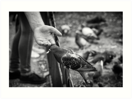 Feed the birds by Ellesscee