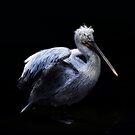Pelikan by lucyliu