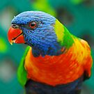 Laurie the Lorikeet by Penny Smith
