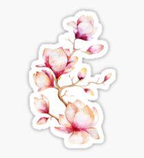 Pink Watercolor Magnolia Illustration Sticker