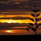 Kanarischer Sonnenuntergang, Teneriffa von JCDesignsUK