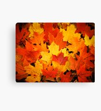 Pile of Colorful Maple Leaves Canvas Print