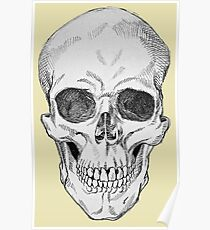Frontal Skull Anatomical Drawing Poster
