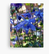 Tranquil ... Canvas Print