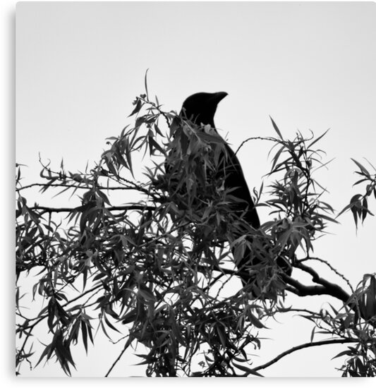 Black Bird On A Tree by Francis Yamoah