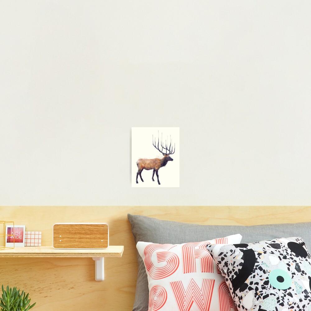 Elk // Reflect Photographic Print