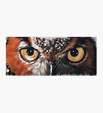 Eye-Catching Great Horned Owl Photographic Print