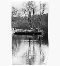 Winter tree reflections  Poster