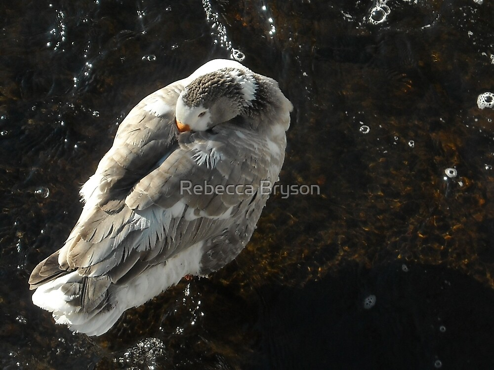 Now This is Cold Duck! by Rebecca Bryson