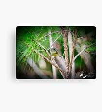 Tucked Away in the Long Needle Pines. Canvas Print