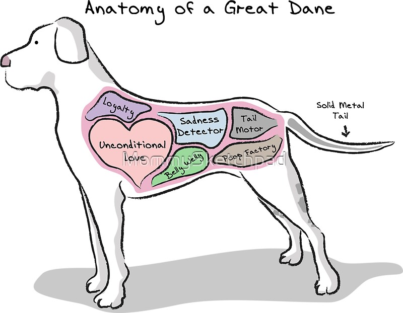 """Anatomy Of A Great Picture: """"Anatomy Of A Great Dane"""" Stickers By MommySketchpad"""