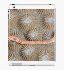 Black-breasted Pipefish iPad Case/Skin