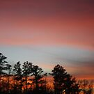 Dark trees at Sunset by Teresia Newton