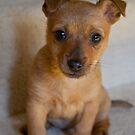Meet Poppy! by GerryMac