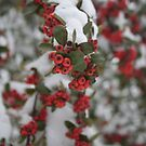Berry Winter by Teresia Newton