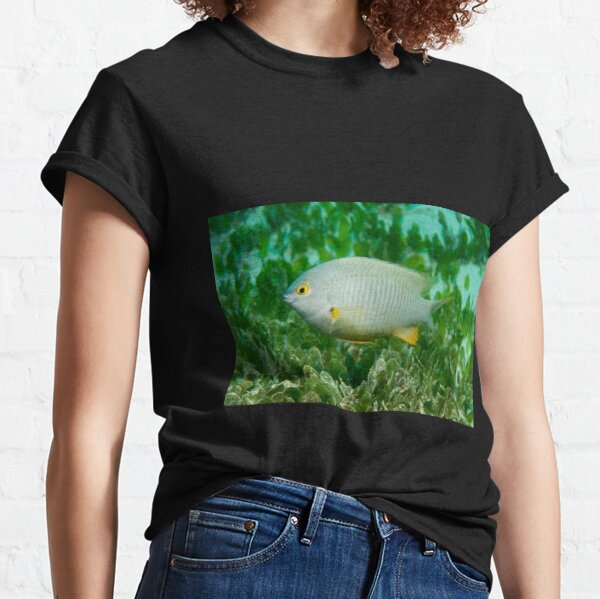 Coral Sea Gregory, Lord Howe Island Classic T-Shirt