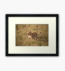 LION CUB READY FOR SOME PLAYTIME Framed Print