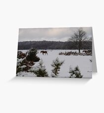 New Forest Ponies in the snow Greeting Card