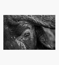 BUFFALO'S EYE Photographic Print