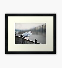 Sitting on The Fence Framed Print
