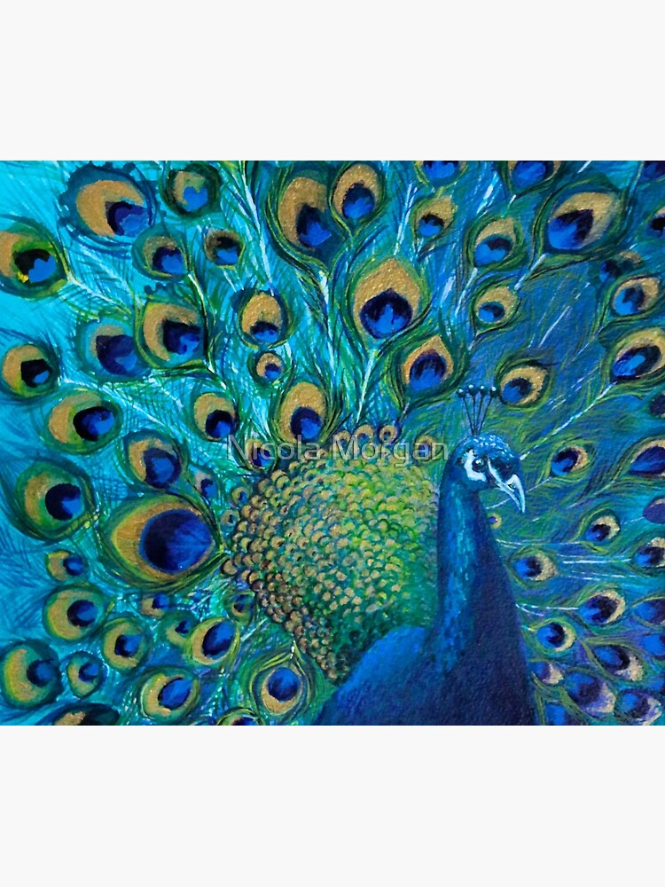 Full Glory Peacock by nicolamorgan