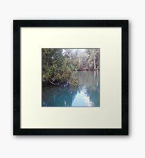 Homosassa Springs Manatee Pond Framed Print