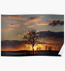 Tree sunset field  Poster