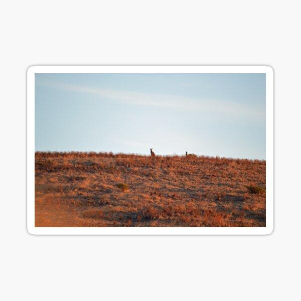 Kangaroo Sunset at Carrickalinga Sticker