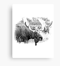 Bull Moose. Wildlife Moose. Moose Antlers. Canadian Moose. Alaskan Moose. Canvas Print