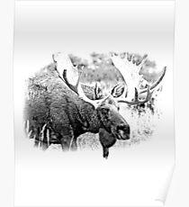 Bull Moose. Wildlife Moose. Moose Antlers. Canadian Moose. Alaskan Moose. Poster