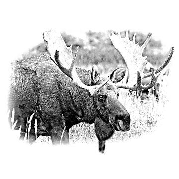 Bull Moose. Wildlife Moose. Moose Antlers. Canadian Moose. Alaskan Moose. by digitaleclectic