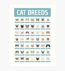 Lámina artística Razas de gatos