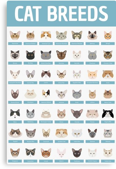 Cat Breeds by babybigfoot