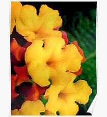 Mini macro flowers Poster