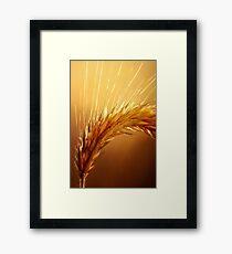Wheat macro Framed Print