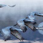 Cranes in morning by Eivor Kuchta