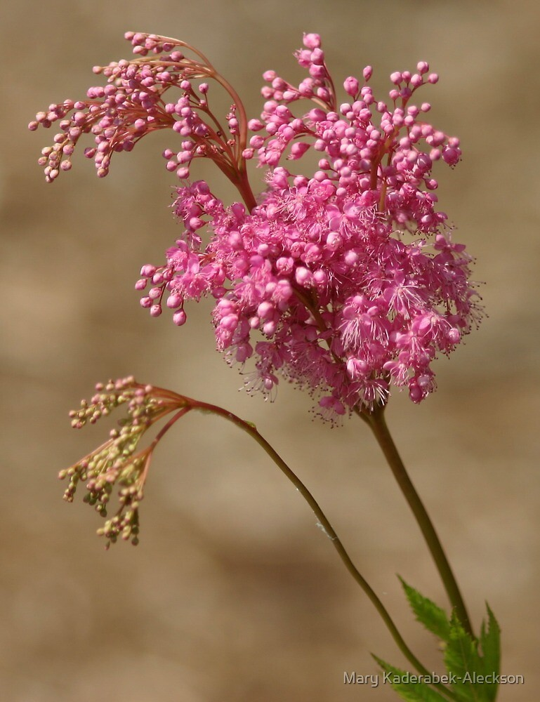 Flower Queen by Mary Kaderabek-Aleckson