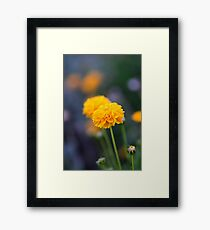 Golden Garden Flowers Framed Print