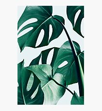 Monstera #redbubble #artprints Photographic Print