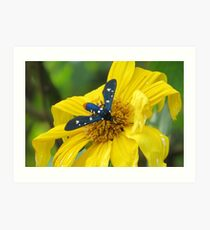Polka-Dot Wasp Moth (Oleander Moth) on a Mexican Sunflower Art Print