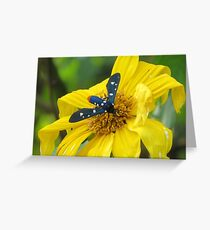 Polka-Dot Wasp Moth (Oleander Moth) on a Mexican Sunflower Greeting Card