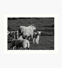 Lamb and Ewe Art Print