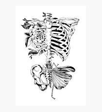 Body Bones Photographic Print